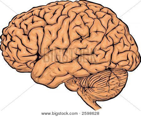 Argumentative essay on mind brain identity theory